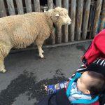 [育]こども動物園